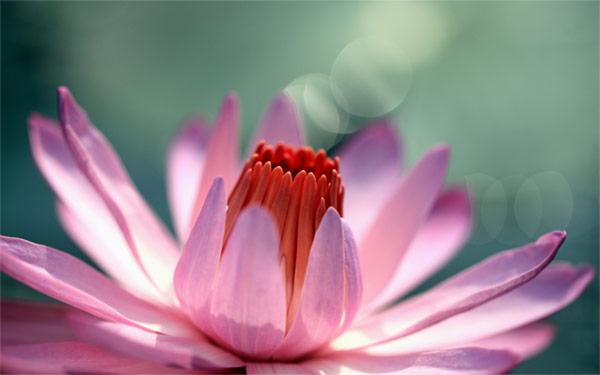 Ретрит-мистерия «Путь Любви»